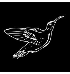 Hand-drawn pencil graphics colibri bird Engraving vector