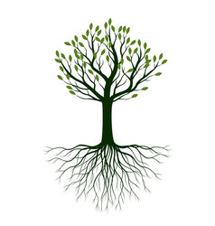 summer naked tree outline plant in vector image