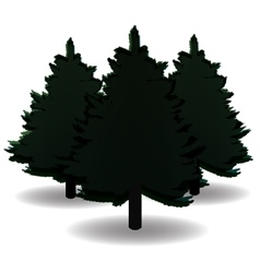 Three black and white spruce and their shadows vector