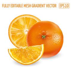 Whole orange and orange slices on a white vector