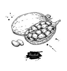 Baobab superfood drawing isolated hand vector