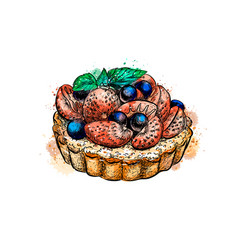 cake with strawberries from a splash watercolor vector image