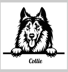 Collie - peeking dogs - breed face head isolated vector