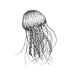 Dotwork sea jellyfish vector