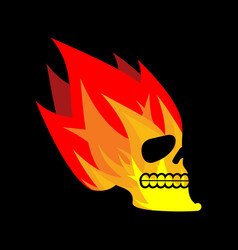 Skull fire head skeleton flame flaming skull vector