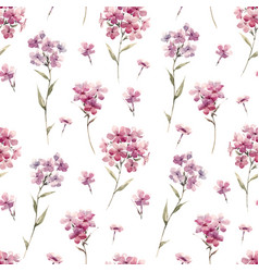 Watercolor floral phlox pattern vector