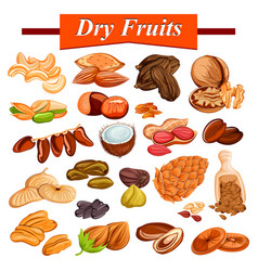 assorted dry fruit set including cashewnut almond vector image