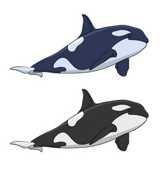 Color image of a killer whale vector