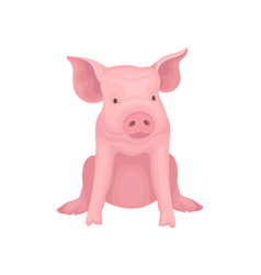 Cute little pig sitting isolated on white vector