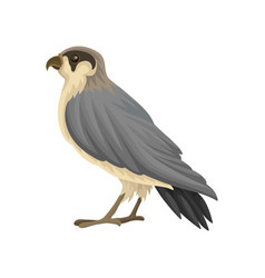 Detailed flat icon of egyptian falcon vector