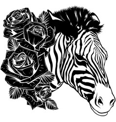 draw in black and white head zebra with roses vector image
