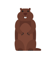 flat style of marmot vector image
