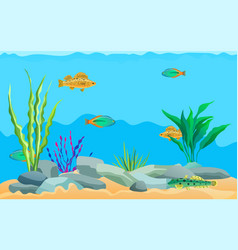 Multicolored sea animals water plants and stones vector