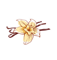 Vanilla flower and sticks isolated icon vector