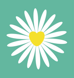 white daisy chamomile icon cute flower plant vector image