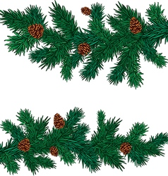 some green spruce branches with cones vector image vector image