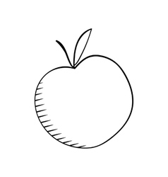 apple sketh vector image