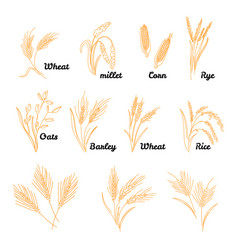 cereals icon set with rice hand drawn vector image