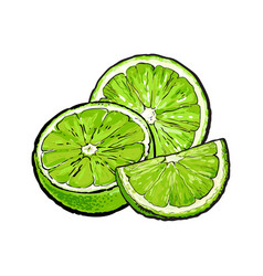 half and quarter of ripe unpeeled lime hand drawn vector image