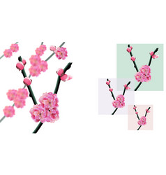 sakura branches of a cherry tree with flowers and vector image