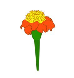 tagetes flower vector image