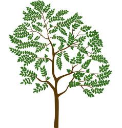 isolated cartoon tree vector image