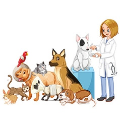 Vet and many injured animals vector image