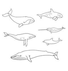 sea mammals cetacea in outlines vector image