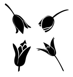 set of tulip flowers vector image