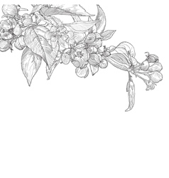 Vintage hand drawn blooming apple tree twig vector