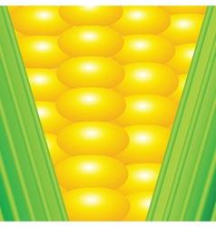 An earn of corn vector