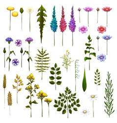 floral Art Brushes for your design vector image