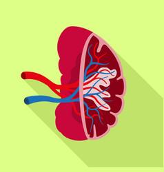 healthy spleen icon flat style vector image