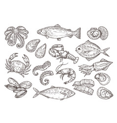 Seafood sketch vintage fish drawing food vector