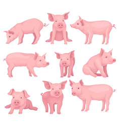 Set of pigs in different poses cute farm vector
