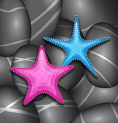 Starfishes among sea pebble stones vector