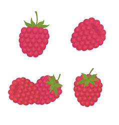 sweet berry a raspberry vector image