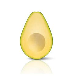 3d realistic cut half seedless avocado vector