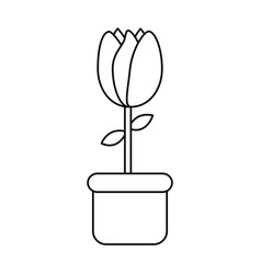 potted tulip flower decoration ornament vector image