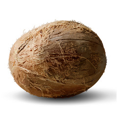 whole coconut on a white background 3d high vector image