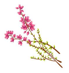 Icon of calluna vulgaris or heather vector