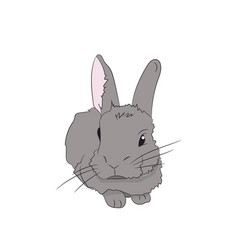 rabbit lies vector image