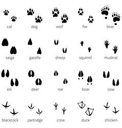 Set 20 animal footprints icon vector
