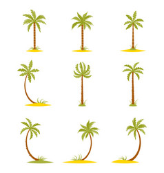 Set colored palms in a flat style vector