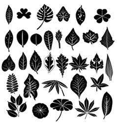 Silhouette leaves set vector