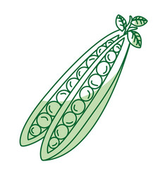 String bean fresh vegetable icon vector