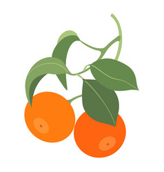 two tangerines on branch isolated on white vector image