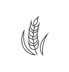 Wheat outline icon vector