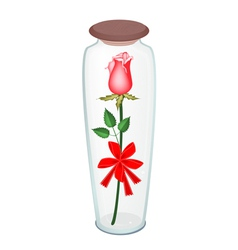 a lovely red rose with red ribbon in glass bottle vector image