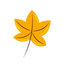 autumn leaf maple foliage flora decoration vector image